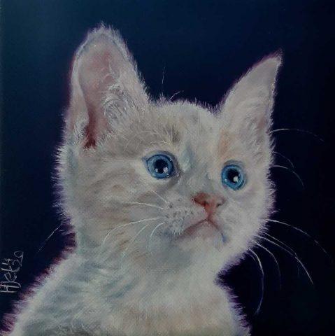 Kitten olieverf 20 x 20 cm