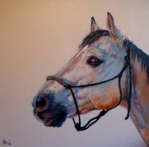 Paard Duke
